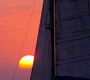 Pink Sunset Posters - Why We Sail Poster by Karen Wiles