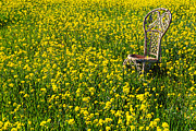 Wicker Chair Prints - Wicker chair in mustard grass Print by Garry Gay