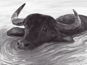 Buffalo River Paintings - Wilbur by Lonnie Tapia