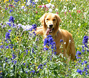 Golden Settings Pet Photography Photos - Wild Abondonment In The Wildflowers by Kara Kincade