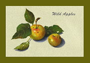 Apples Drawings Posters - Wild Apples And Leaves Poster by Joyce Geleynse