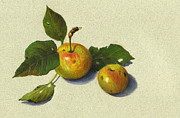 Fruit Trees Drawings - Wild Apples in Color Pencil by Joyce Geleynse