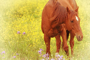 Brown Horse Posters - Wild as the Flowers Poster by Karol  Livote