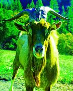 Goat Digital Art Metal Prints - Wild Billy of Orr Hot Springs Metal Print by JoAnn SkyWatcher