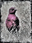 Surrealism Fine Art - Wild Bird by Miss Dawn