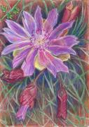 Wyoming Drawings - Wild Bitterroot Flower by Dawn Senior-Trask