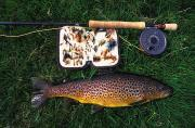 Fishing Rods Metal Prints - Wild Brown Trout And Fishing Rod Metal Print by Axiom Photographic