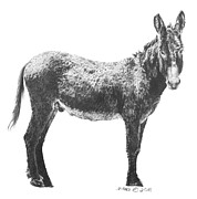 Donkey Drawings Prints - Wild Burro Print by Marianne NANA Betts