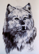 Wildlife Drawings Drawings Prints - Wild Canines Print by Cheryl Poland