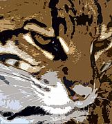 Wild Cat Prints - Wild cat Print by David Lee Thompson