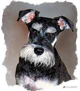 Miniature Schnauzer Digital Art - Wild Cody Wyo by Tom Schmidt