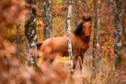 Stallion Prints - Wild Print by Evgeni Dinev