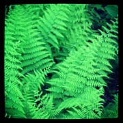 Christy Bruna Prints - Wild Fern Leaves Print by Christy Bruna