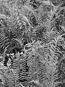 Preserve - Wild Florida Ferns by Juergen Roth
