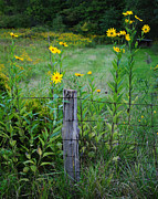 Pretty Wildflower Prints - Wild Flower Fence Print by Robert Harmon