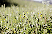 Uncultivated Art - Wild Flower Field by Rolfo
