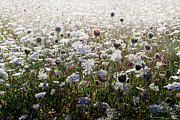 Meadow Flowers Originals - Wild Flower Meadow. by Terence Davis