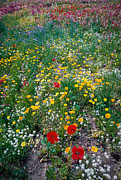 Flowers Along Highway Prints - Wild Flowers 1 Print by Mike Penney