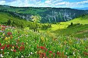 Tranquil Scene Posters - Wild Flowers Blooming On Mount Rainier Poster by Feng Wei Photography