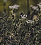 Macro Photography Metal Prints - Wild flowers Metal Print by Kristin Kreet