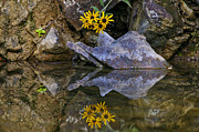 Jeka World Photography Posters - Wild Flowers Reflecting on the Buffalo River Poster by Jeka World Photography