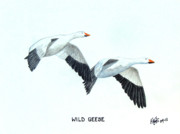 Pencil Drawings By Frederic Kohli - Wild Geese by Frederic Kohli