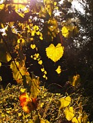 Grape Leaves Photos - Wild Grape in the Sunshine by Theresa Willingham