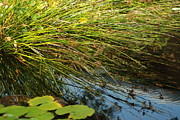 Nature Center Pond Prints - Wild Green Grass and a Blue Pond Print by Jennifer Holcombe