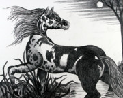 Wild Horse Drawings - Wild Horse by Bob Crawford