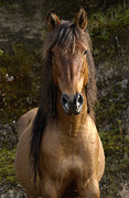 Waist Up Photos - Wild Horse Equus Caballus In Open by Pete Oxford