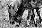 Iphoneonly Art - Wild Horses 1 by Mickey Hatt
