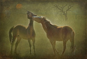 Wild Horses Posters - Wild horses at play Poster by Carolyn Dalessandro