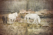 White Horses Photo Prints - Wild Horses Couldnt Drag Me Away Print by Marcie Adams Eastmans Studio Photography