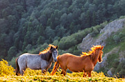 Balkan Mountains Framed Prints - Wild Horses Framed Print by Evgeni Dinev