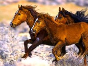Wild Horses Digital Art Prints - Wild Horses In Winter Print by Ben Freeman