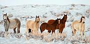 White Horse Pastels Originals - Wild Horses by Mary Benke