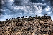 Spencer McDonald - Wild Horses Monument