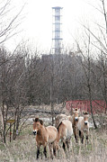 Alienation Prints - Wild Horses Near Chernobyl Print by Ria Novosti