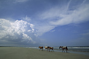 Clouds Photos - Wild Horses Roaming A Georgia Coast by Michael Melford