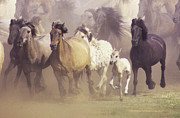 Horse Herd Photo Prints - Wild Horses Running Print by John Foxx