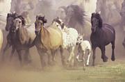 Wild Horses Running Print by John Foxx