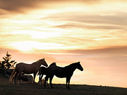 Pryor Posters - Wild Horses Sunset 3 Poster by Leland Howard