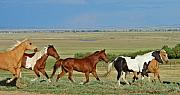 Wild Horses Digital Art - Wild Horses Wyoming by Heather Coen