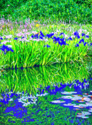 Waterlilies Mixed Media Posters - Wild Iris and Waterlilies Poster by Dominic Piperata