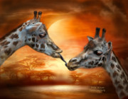 Romantic Giraffe Art Print Posters - Wild Kisses Poster by Carol Cavalaris