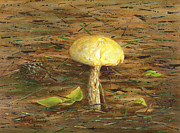 Forest Floor Painting Framed Prints - Wild Mushroom on the Forest Floor Framed Print by Judy Filarecki