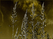 Wild Mixed Media Framed Prints - Wild Oats Framed Print by Heinz Mielke