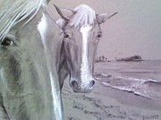 Wild Horses Drawings - Wild Ponies by Barbara Richert