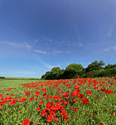 Field. Cloud Prints - Wild Poppies Print by s0ulsurfing - Jason Swain