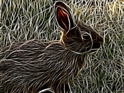 Wild Rabbit Posters - Wild Rabbit Poster by Maciej Froncisz